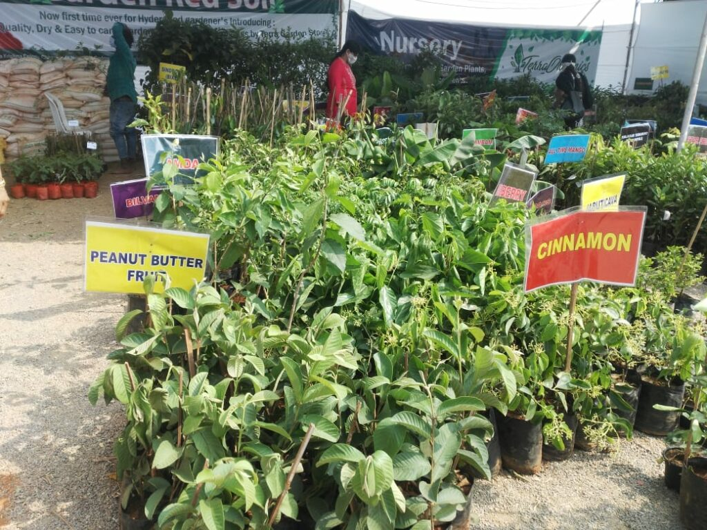 Horticulture expo at People's plaza: Get variety plants under one roof