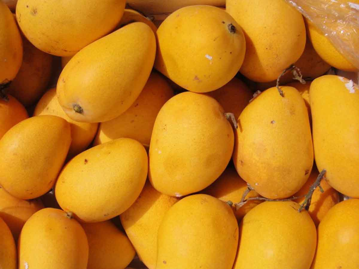 Mangoes arrive in Hyderabad markets