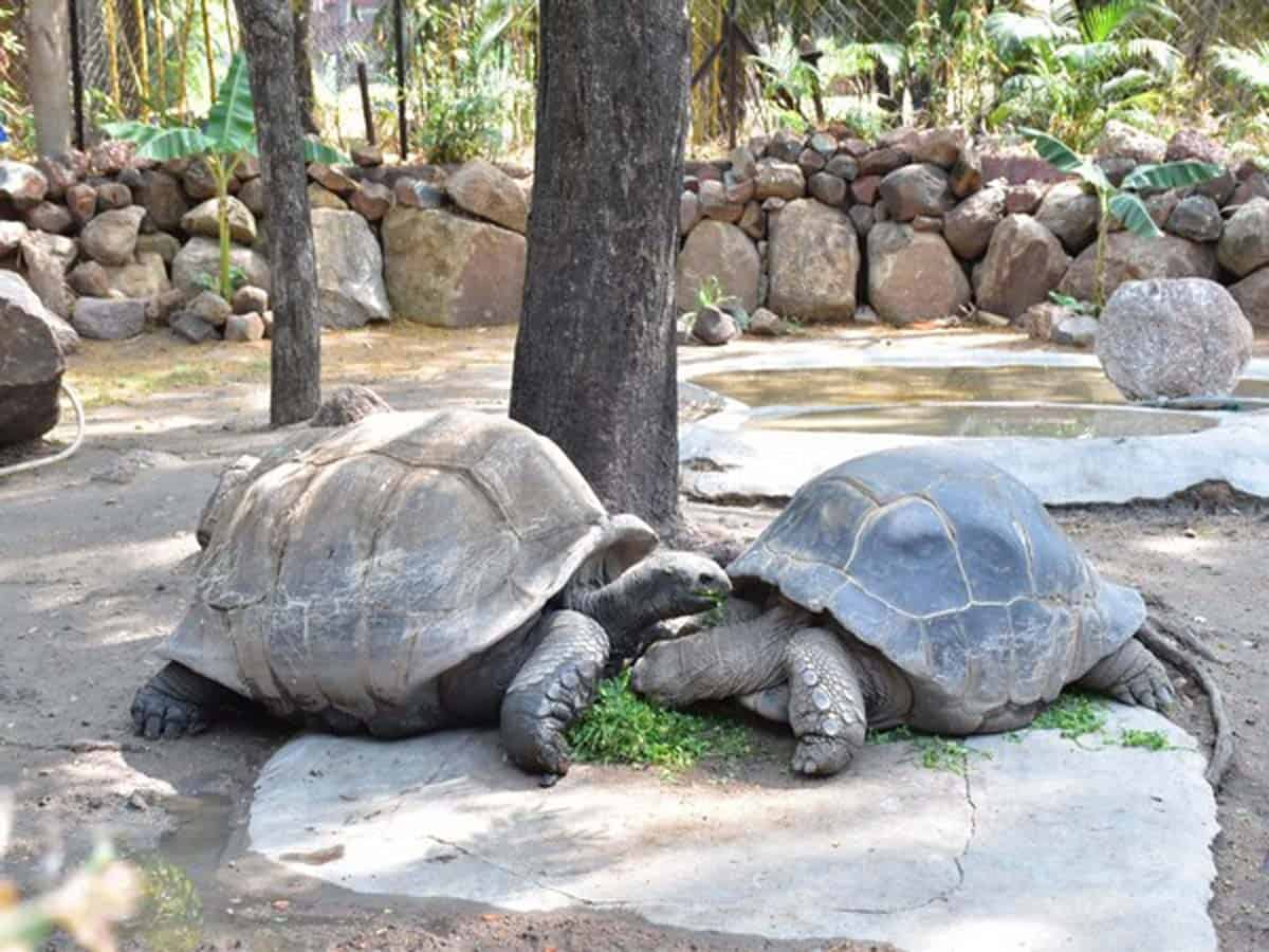Couple adopts Galapagos Giant Tortoise at Nehru zoo in Hyderabad