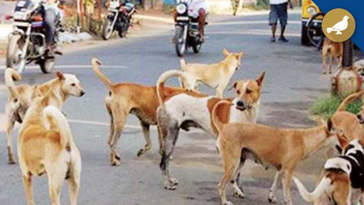 Hyderabad: Veterinary department swings into action over dog menace