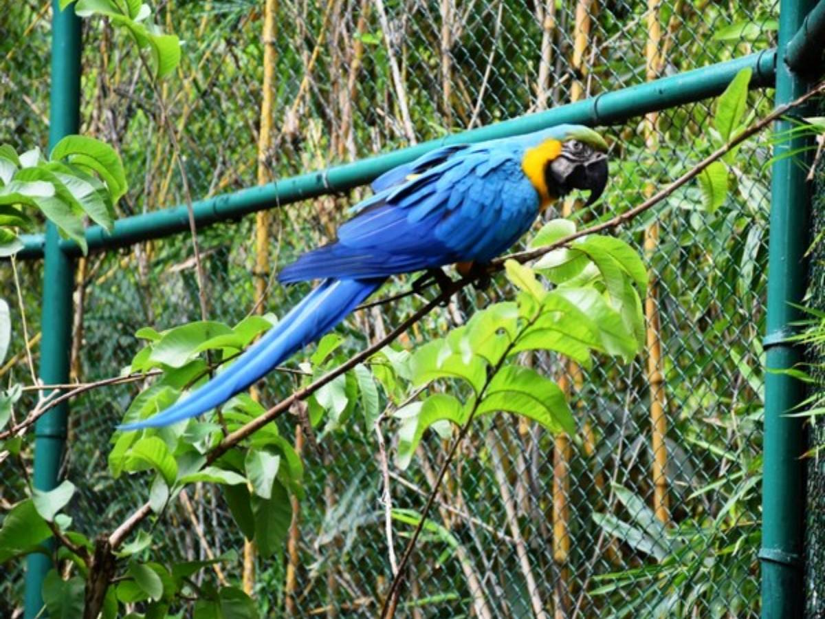 Man adopts Macaw at Hyderabad's Nehru Zoological Park
