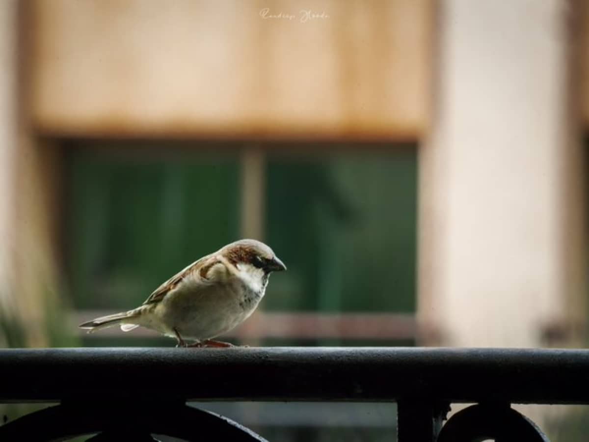 Hyderabad: World Sparrows Day event conducted in KBR Park