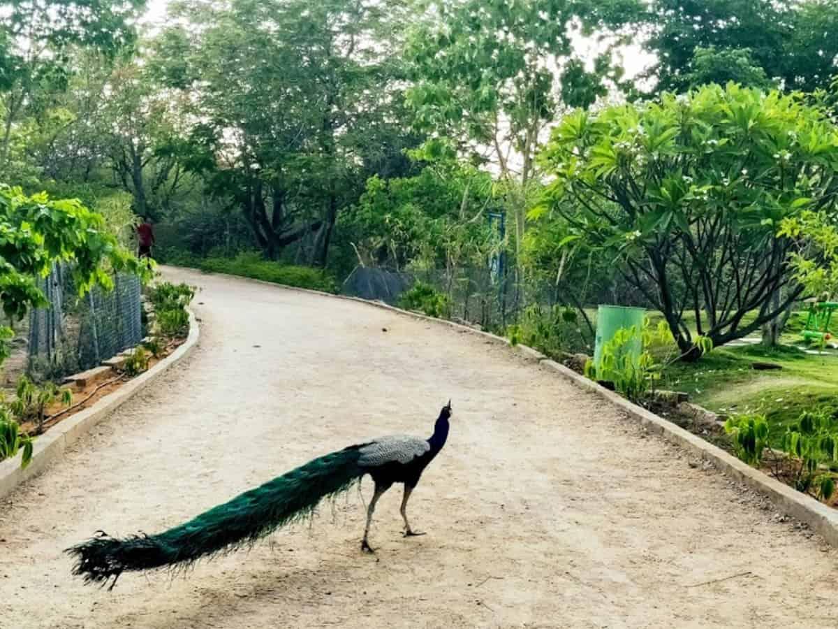 HC seeks Telangana govt response over petition filed to save KBR Park