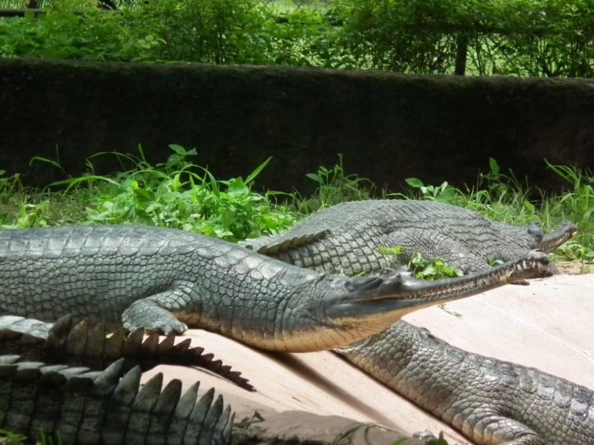 Hyderabad Zoo successfully breeding endangered species