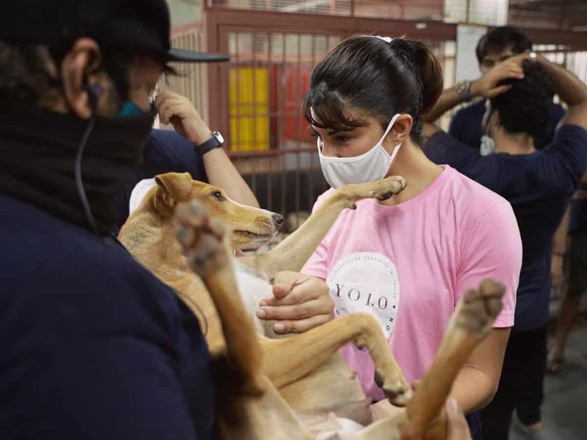 Jacqueline Fernandez's YOLO Foundation volunteers at animal shelters in Mumbai