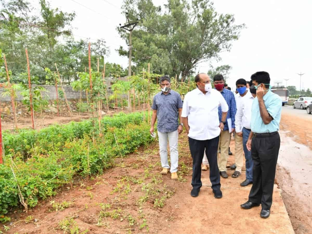 Hyderabad: Multilayer avenue plantation to be taken up along main roads