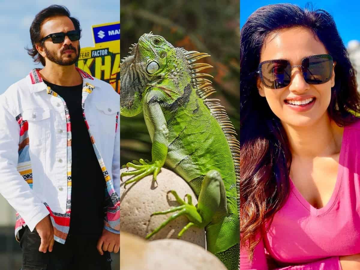KKK 11: In a dangerous stunt, Rohit Shetty asks Shweta Tiwari to kiss Iguana [Video]