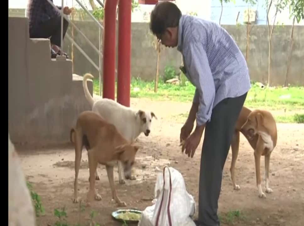 Hyderabad: 63-year-old animal activist feeding, rescuing stray animals for last 11 years