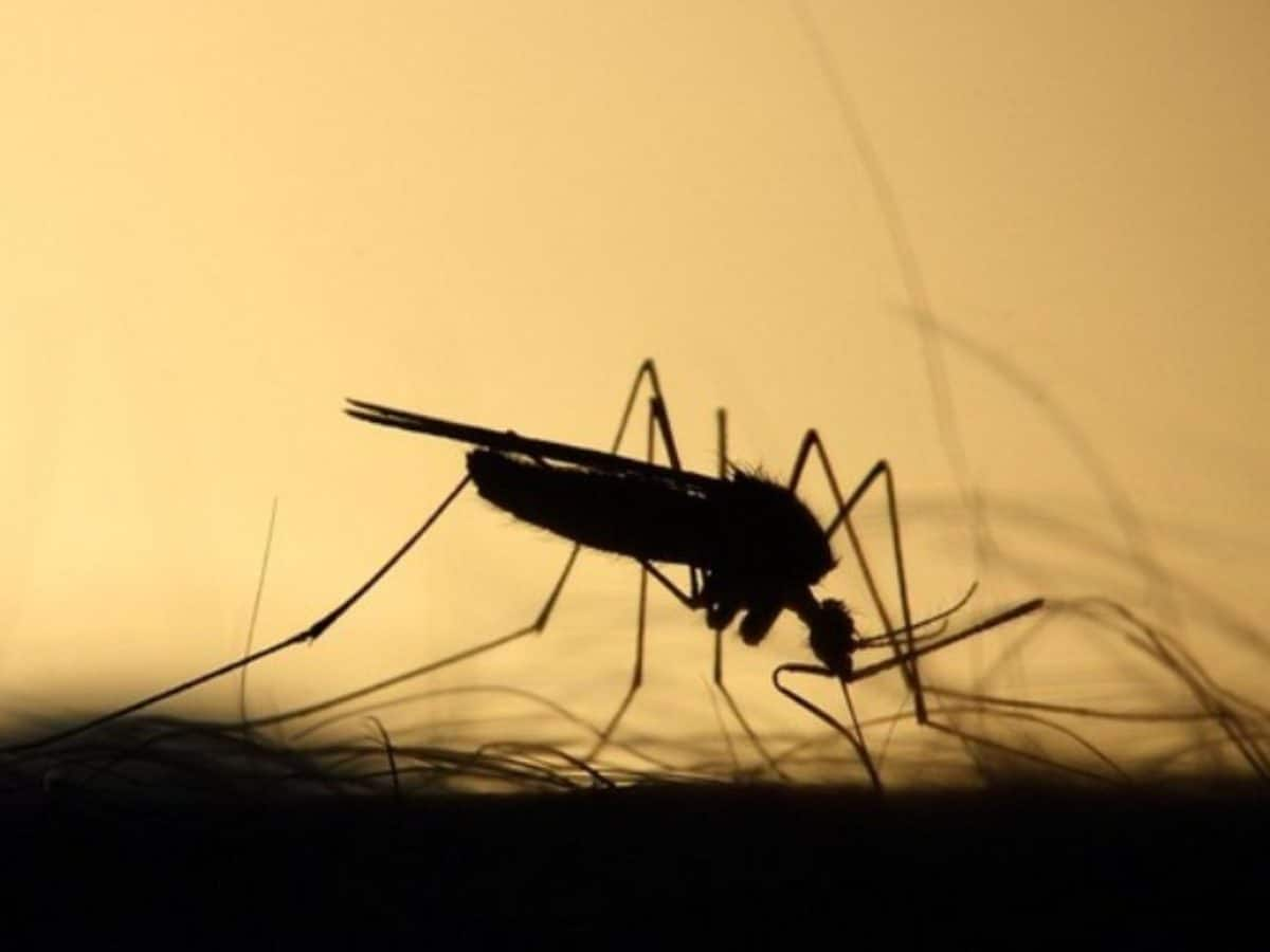 Hyderabad: With 522 dengue fever cases, govt readies team to handle outbreak
