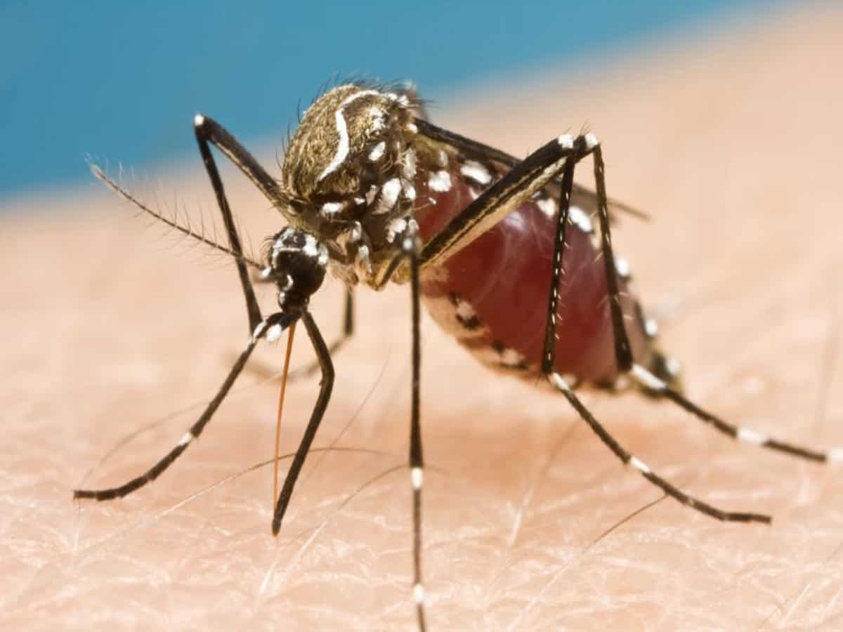 613 cases of Dengue reported in Hyderabad so far; health director warns caution