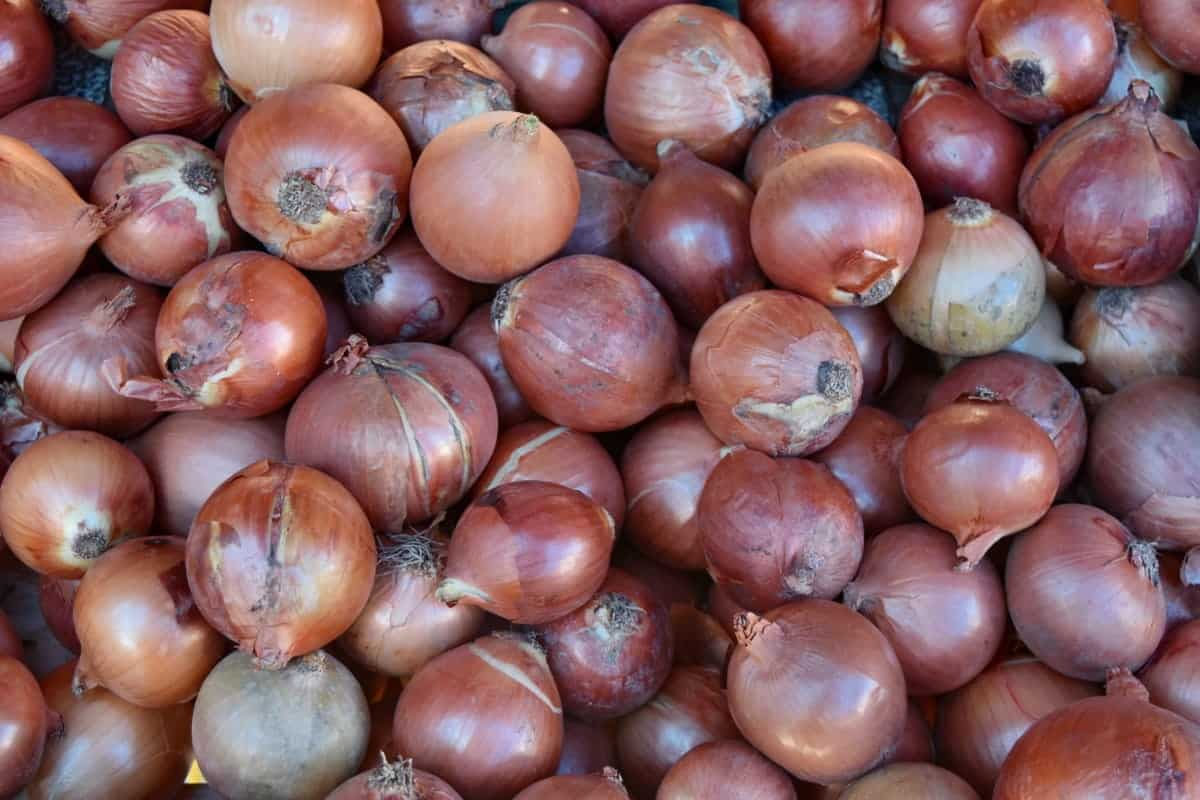 Onion prices in Hyderabad rise due to heavy rainfall