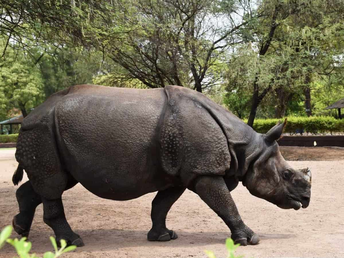 IOC offers to adopt rhinoceros in Hyderabad Zoo